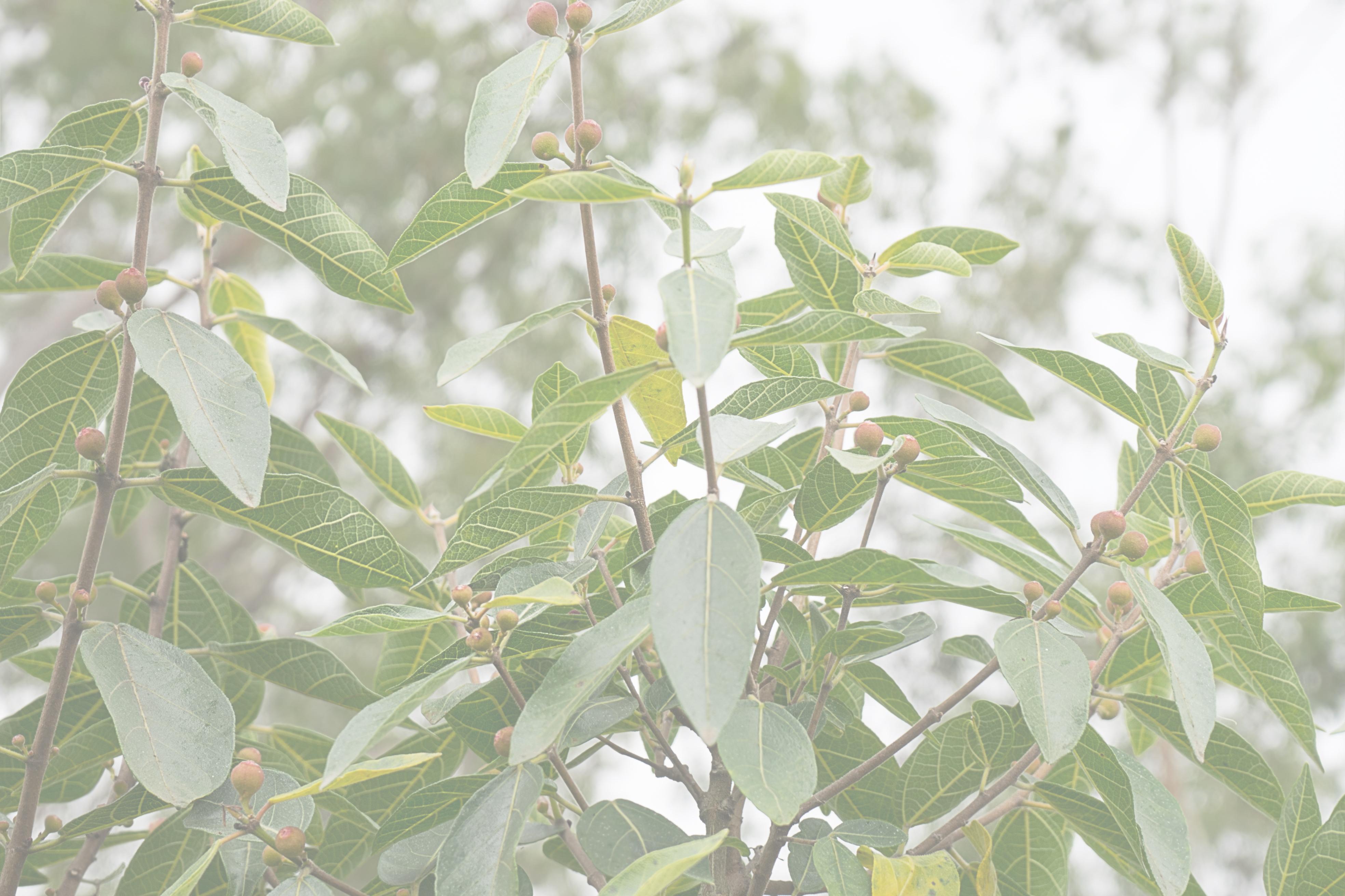 ArborViews Australia - Consulting Arborists