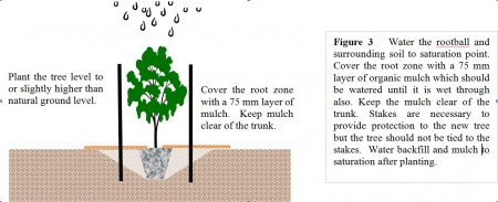 Figure 3 - planting a tree