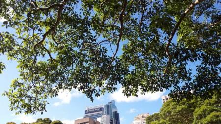 sydney treescape